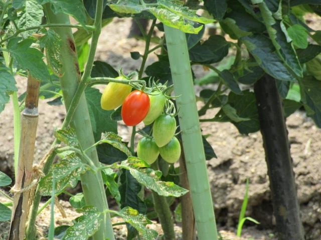 農園芸実習3回目①