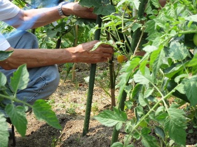 農園芸実習3回目④