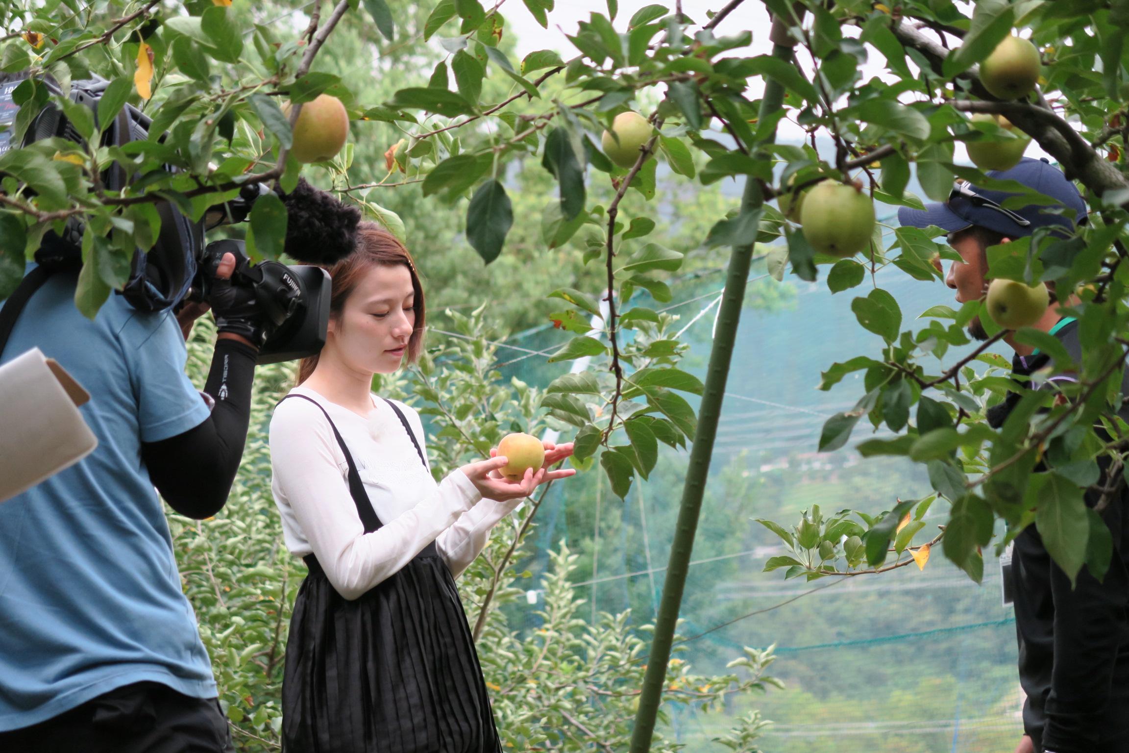 りんご「千秋」の取材