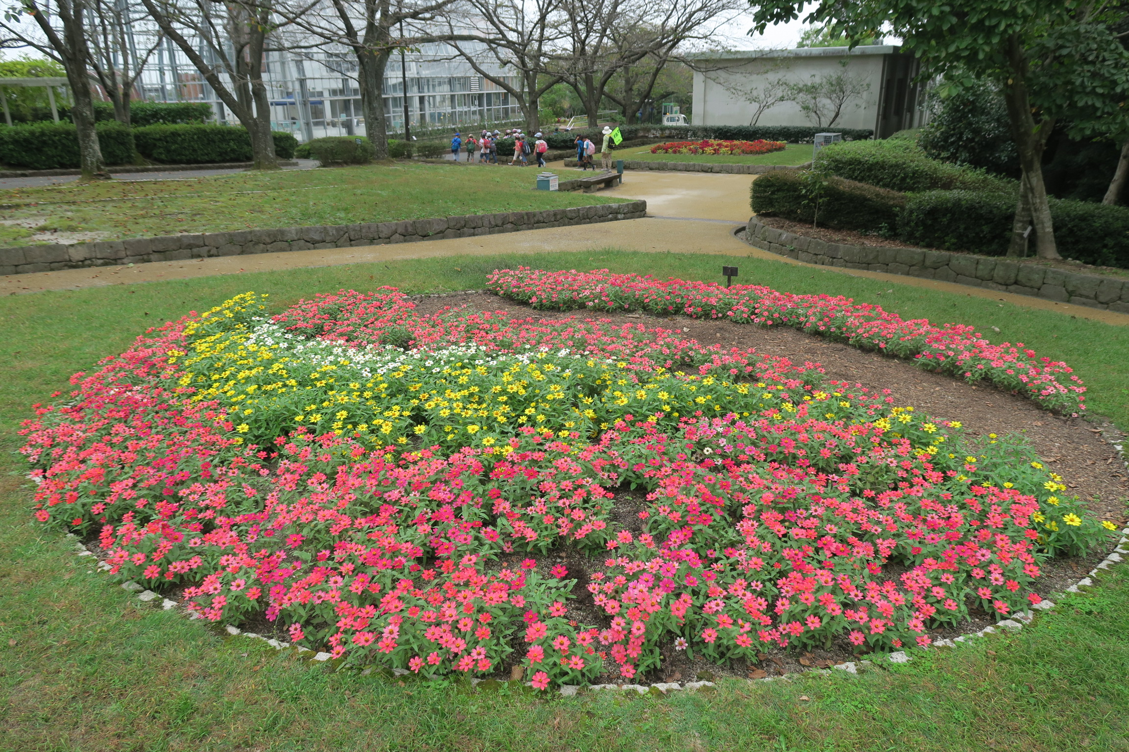 ジニアの花壇ウエーブ