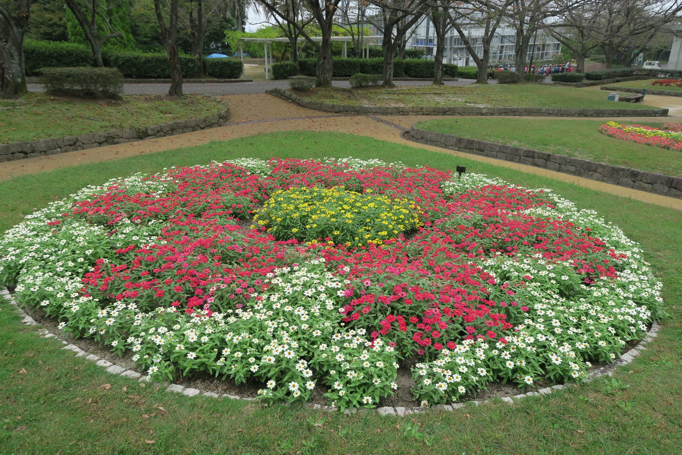 ジニア花のデザイン