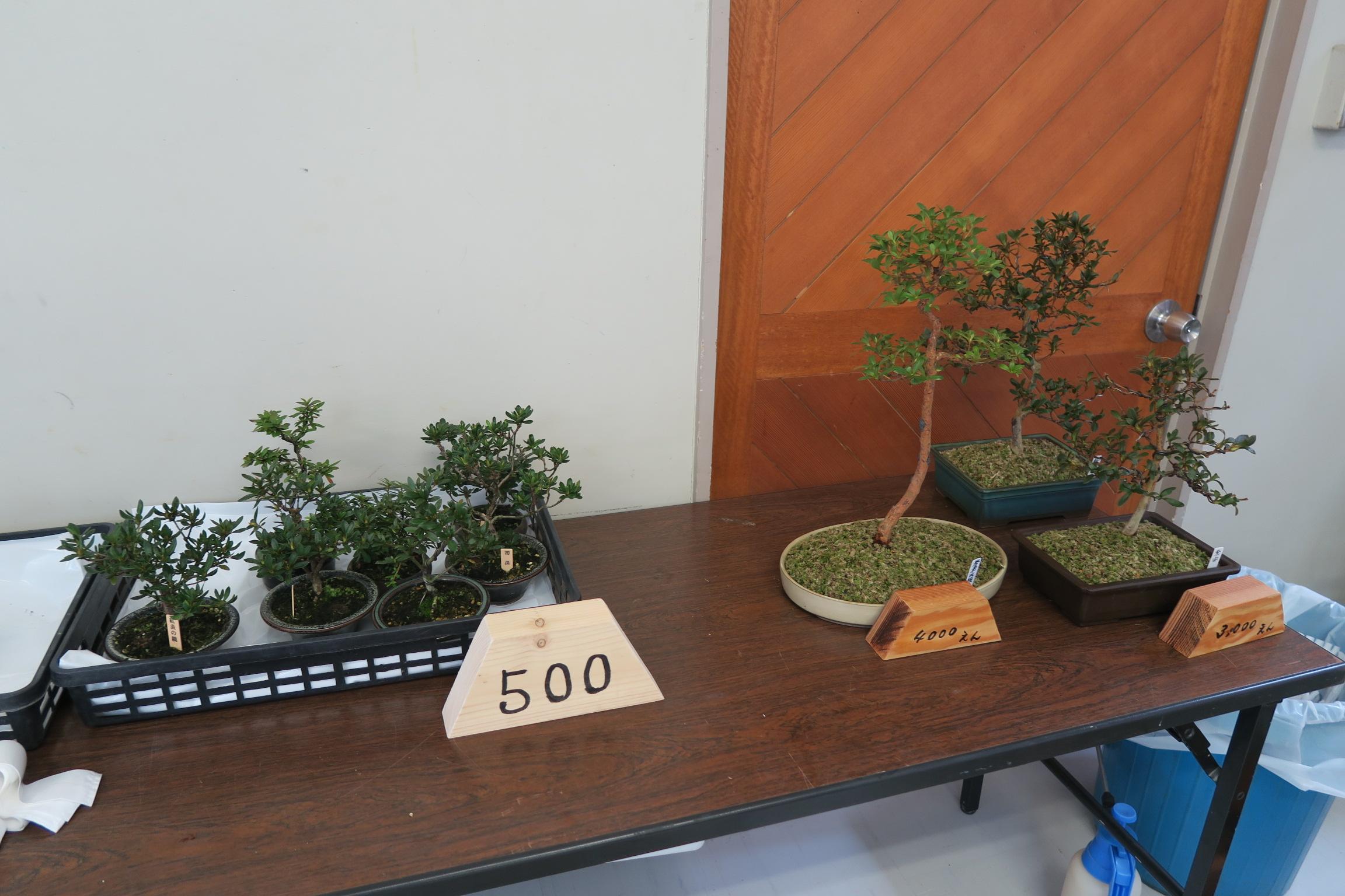 さつき盆栽展3
