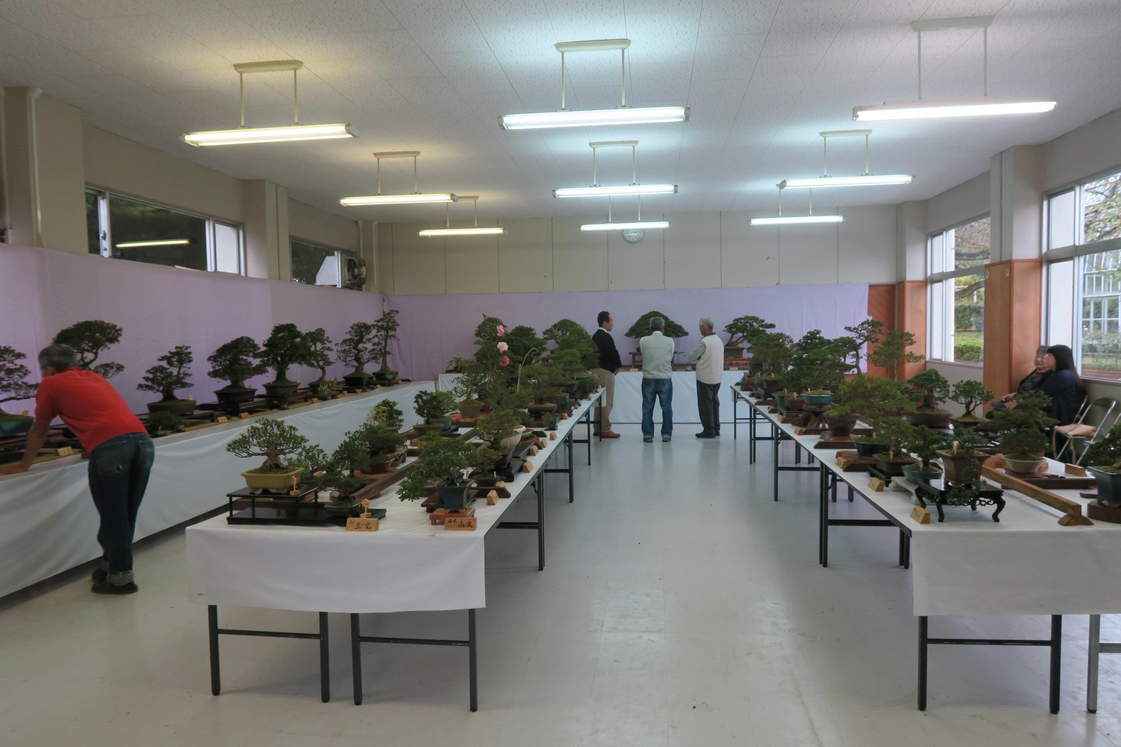 さつき盆栽展2