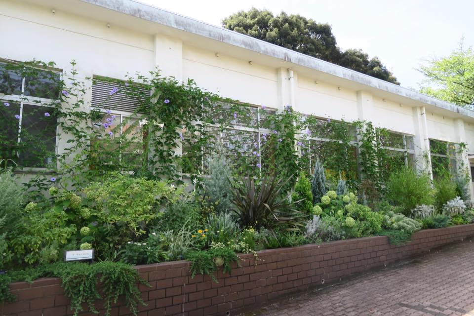 緑のカーテン2