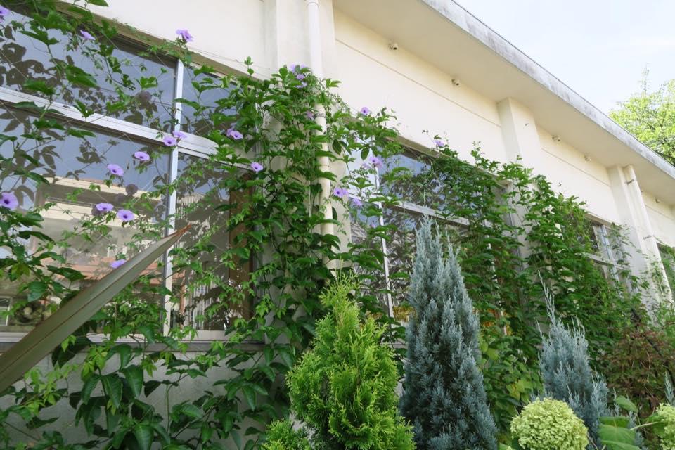 緑のカーテン5