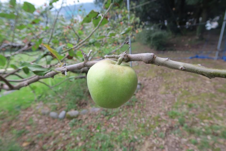 ニュートンリンゴ1