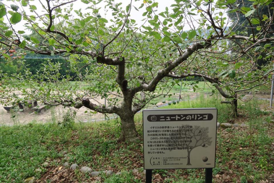 ニュートンリンゴ3