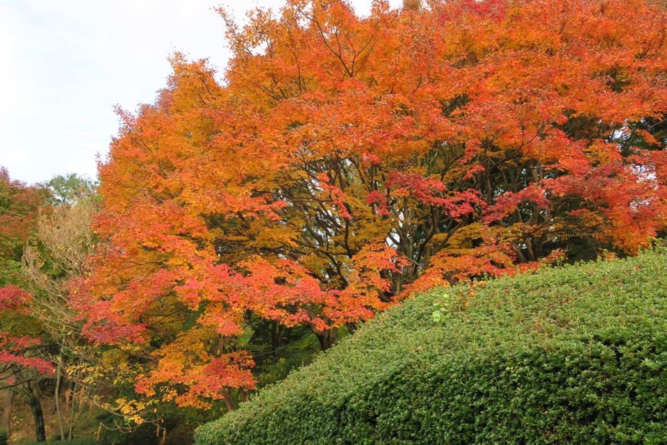 花畑園芸公園紅葉1