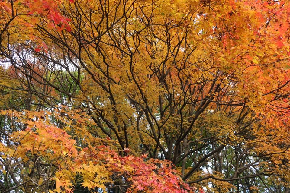 花畑園芸公園紅葉2