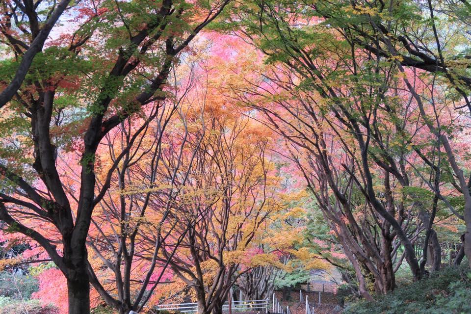 花畑園芸公園紅葉3